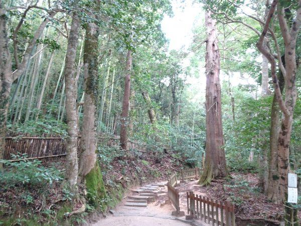 島根・八重垣神社は縁結びの聖地!鏡の池占いとパワースポットで良縁成就しよう!
